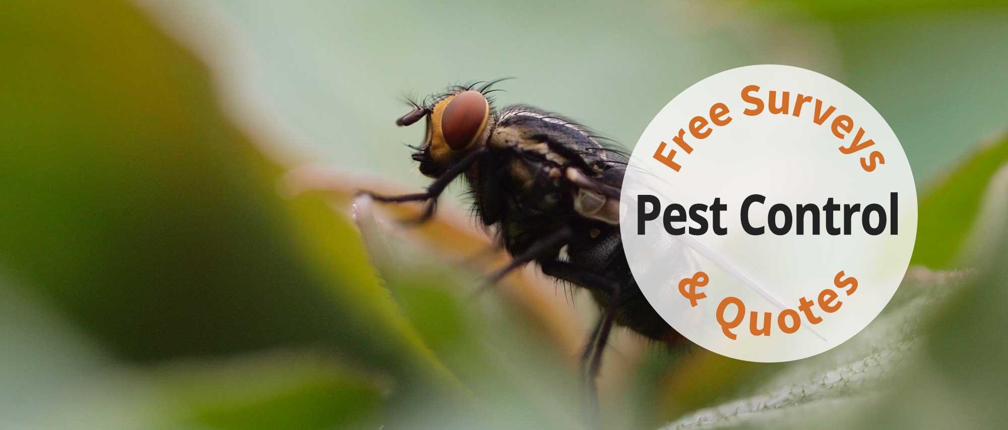 Sweetmeadow Pest Control
